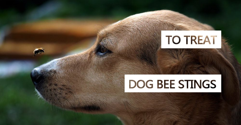 Treat Dog Bee Stings