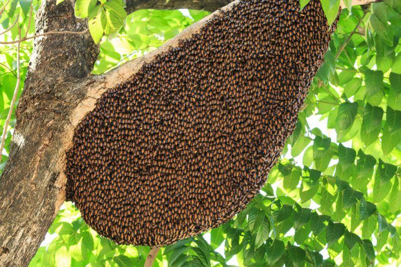Bees and their hive on a tree.