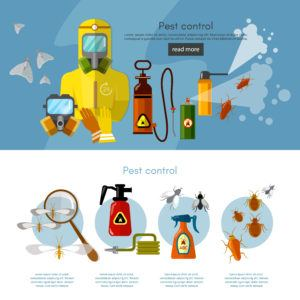Pest control services insects exterminator detecting exterminating insects banner infographics vector illustration.
