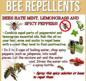 specific information about how to make a DIY bee repellent