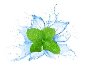 Mint leaves and water splash on the white background.