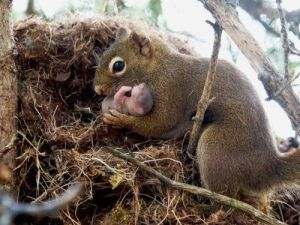 Gray squirrel holds its baby in arms.