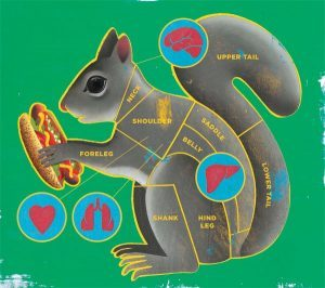 The anatomy of grey squirrel as food.