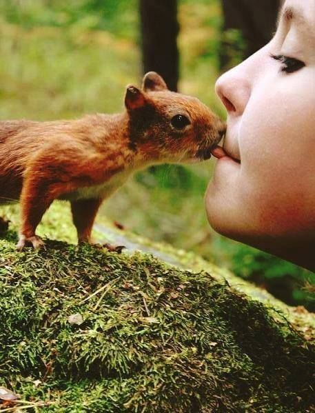 The picture show interaction between red squirrel and human.