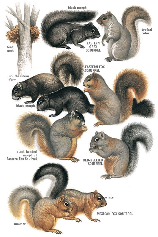 Different squirrels with words named on white background.