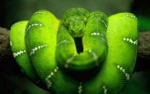 How Do Snakes Mate (Reproduce)? 10 Fun Secrets Revealed