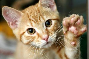 Adorable cat waving its hand