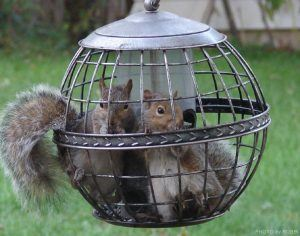 Two squirrels in cage.