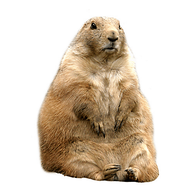 Gopher on white background.