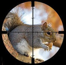 A gun aimed at a squirrel