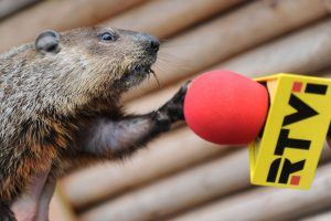 A groundhog is refusing an interview