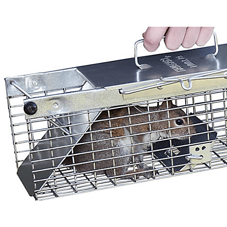 Two doors squirrel trap