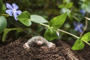 A mole in the nature.