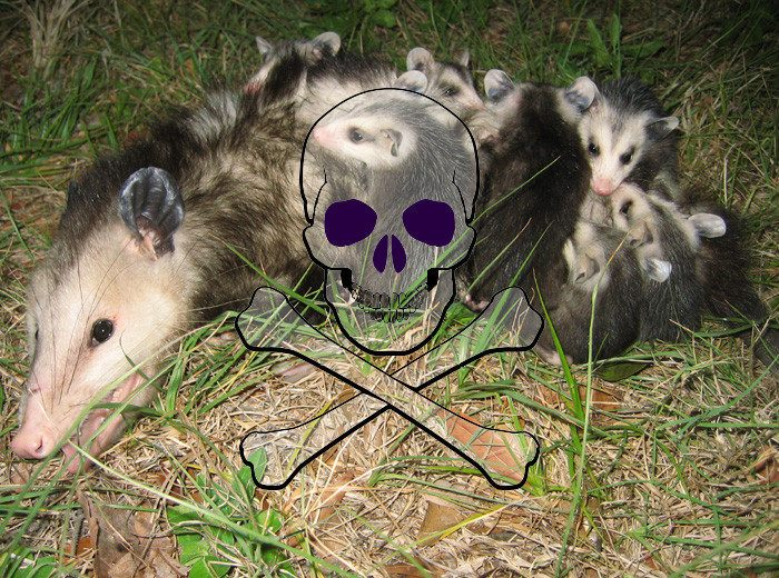 how to get rid of possums in your backyard