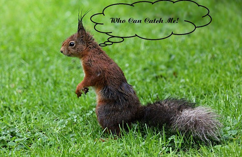 Squirrel says