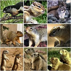 Different types of squirrels collection.