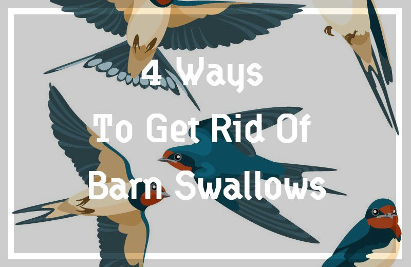 Get Rid Of Barn Swallows