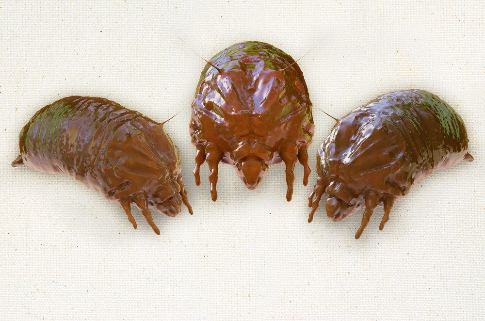 Three dust mites on white background.