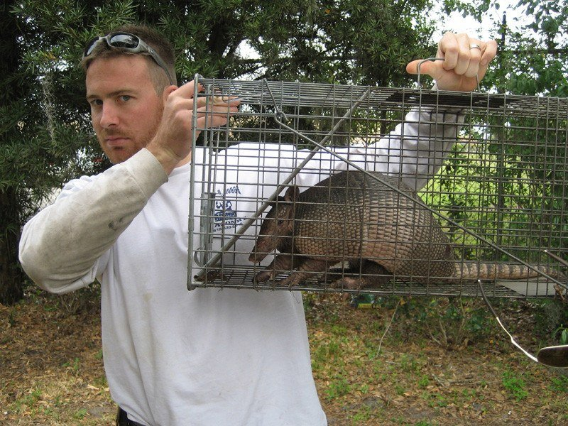 Man holding a cage which trapped armadillo