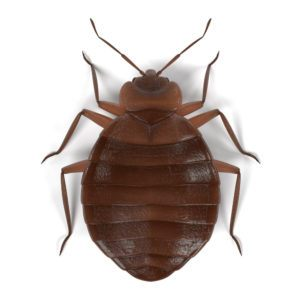 facts about dust mite bites plus differences from bed bug pestwiki. Black Bedroom Furniture Sets. Home Design Ideas