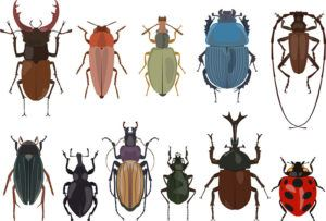 Set of different types of bugs and beetles