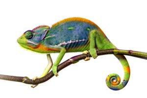A chameleon on branch