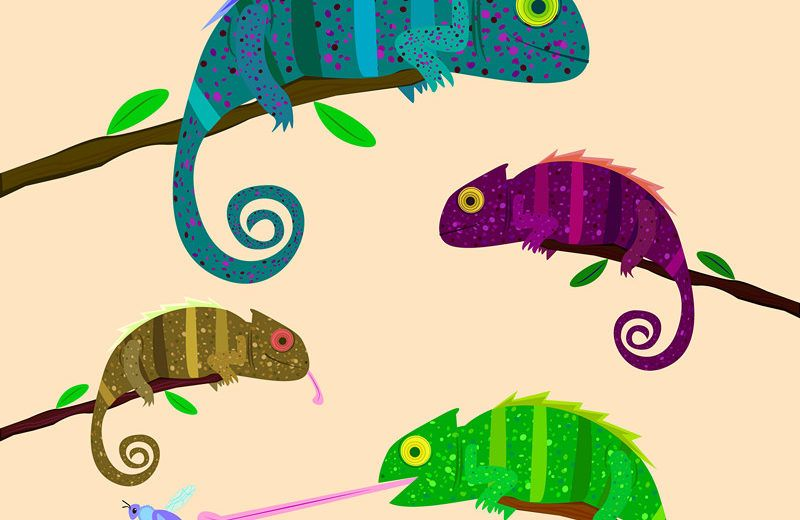 Set of colorful chameleons sitting on the branch on light background