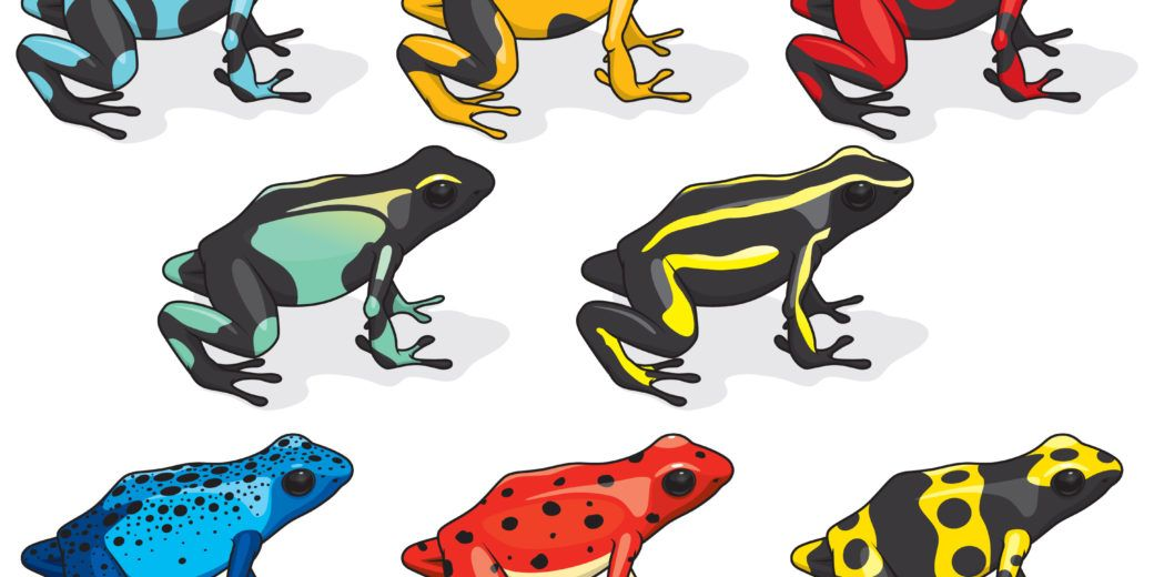 Colorful poison dart frogs on the white.
