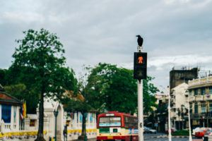 Crow on traffic lights and old town in Bangkok