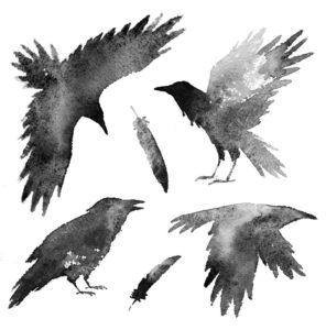 Set with black crows and feathers on white background