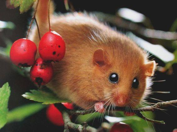Cute dormouse on branch