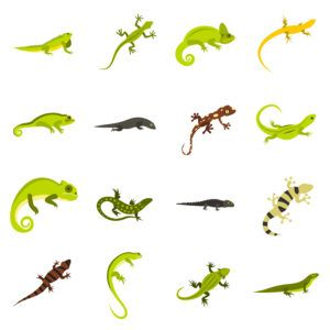 Flat lizard icons set on the white.
