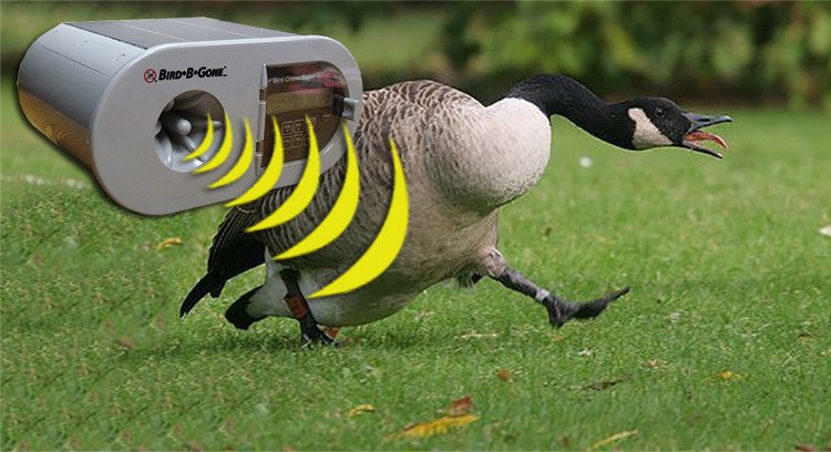 Goose Repellent to scare geese away