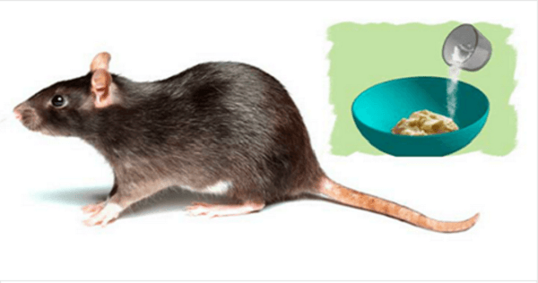 Home methods to get rid of rats