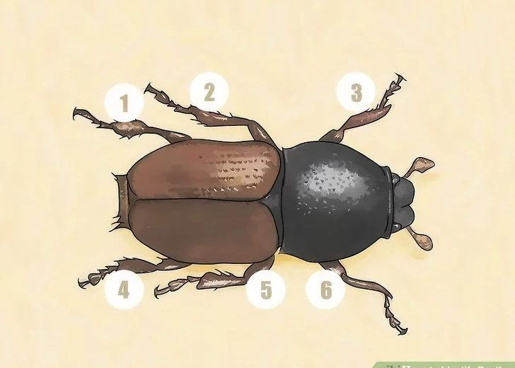 Identify beetles steps