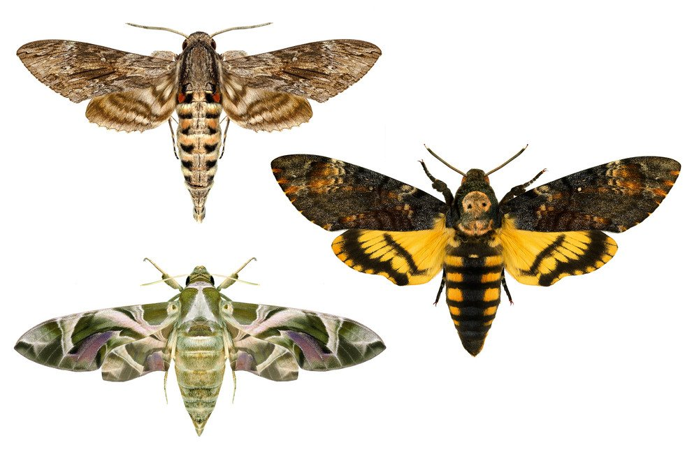 Three different moths isolated on the white.