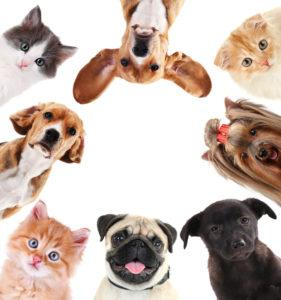 Collage of cute pets on white