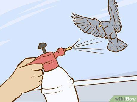 Solutions To Get Rid Of Pigeons Naturally And Fast