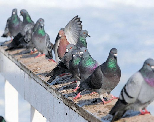 Inspirational How to Keep Pigeons Away From Balcony