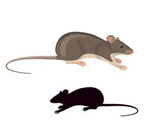 Rats simplified colored image and silhouette