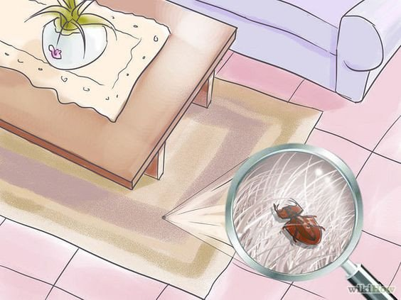 Get rid of carpet beetles on the carpet at home