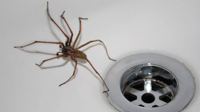 How to get rid of spiders in the house in 3 easy steps for How to get rid of spiders in house