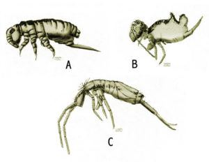 Different springtail samples on white background