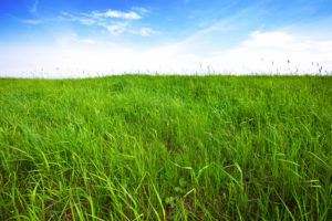 Tall green grass background over sky