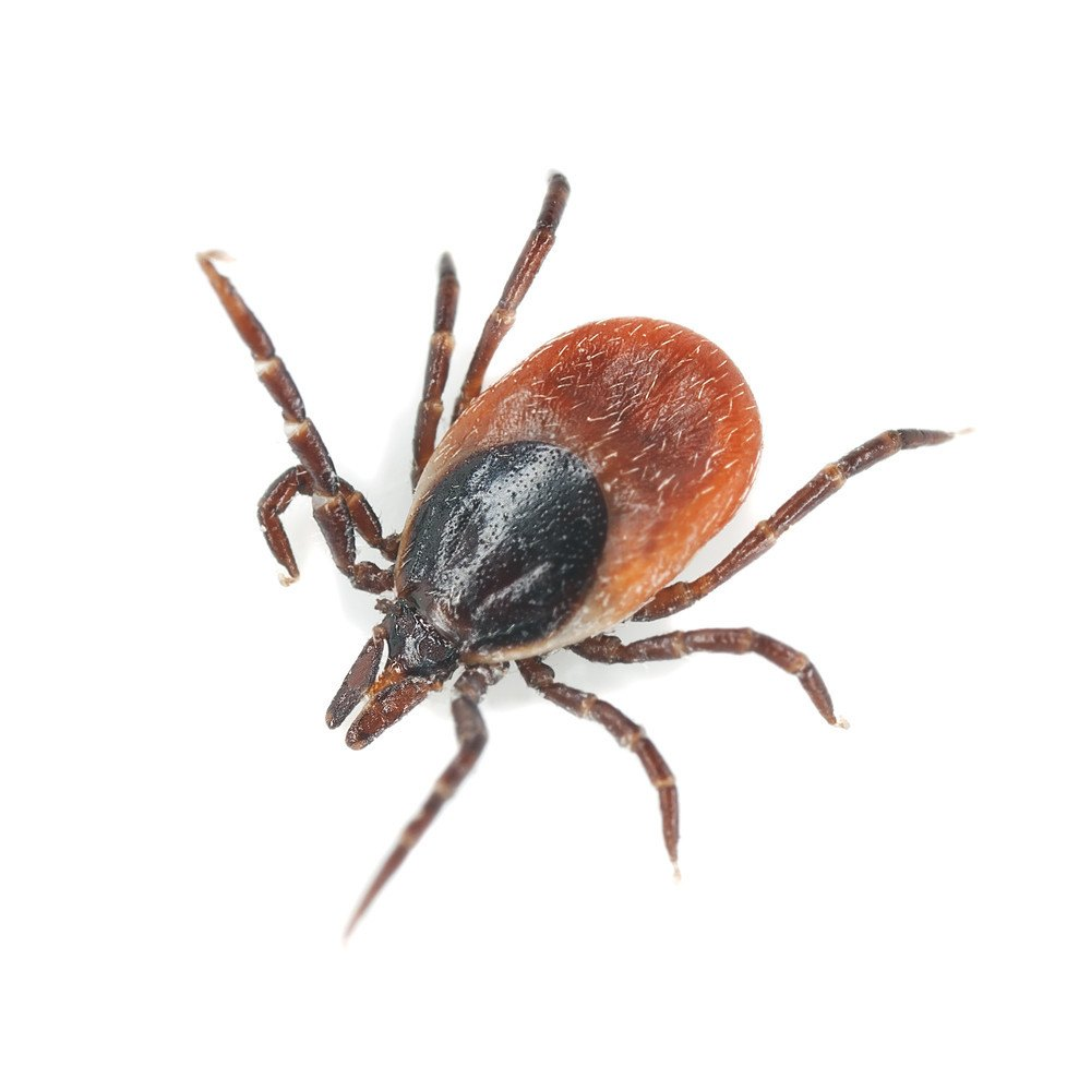 Best Natural Ant Killer For Outdoors