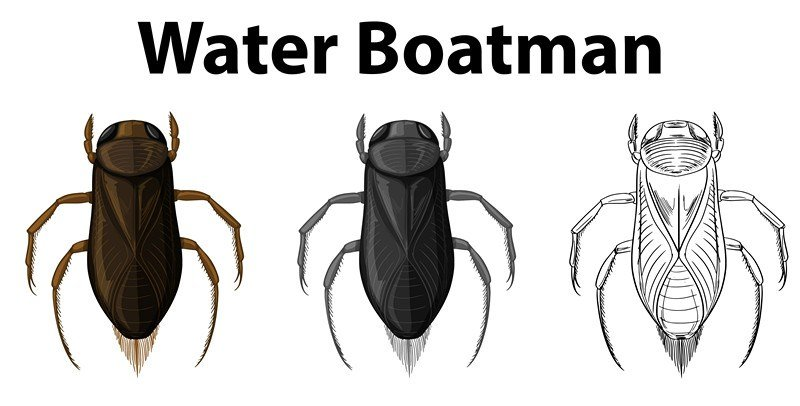 Doodle character for water boatman illustration