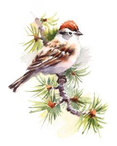 Watercolor Bird Chipping Sparrow on the Branch