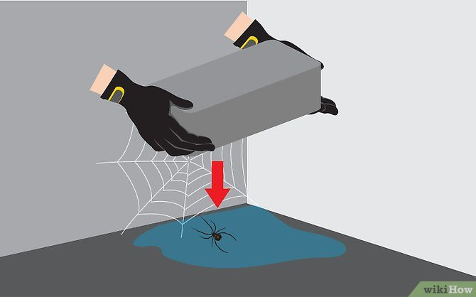 Killing spider at home