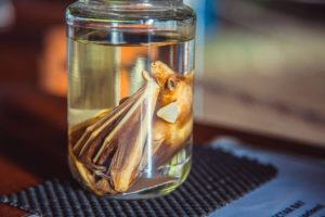 Embryo bat in glass jar with formaldehyde.