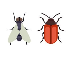 Mosquito and beetle on the white.